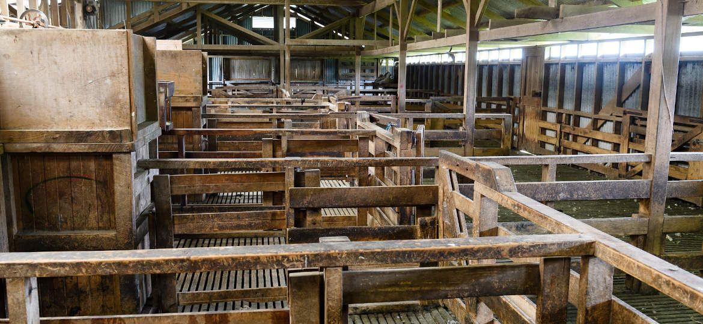Shearing Sheds Peter Lyon