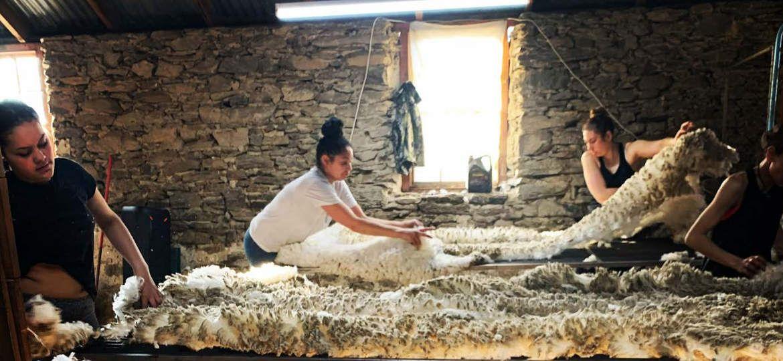 2020 Nov Shearingmag